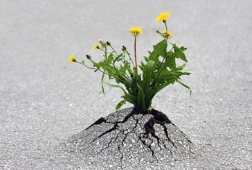 在逆境中成长